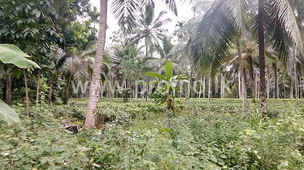 Morawaka, Pelawatta Tea and Coconut Land for Sale