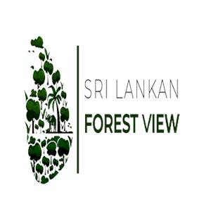 Srilankan Forest view