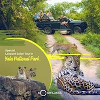 Yala Safari Jeep Tours